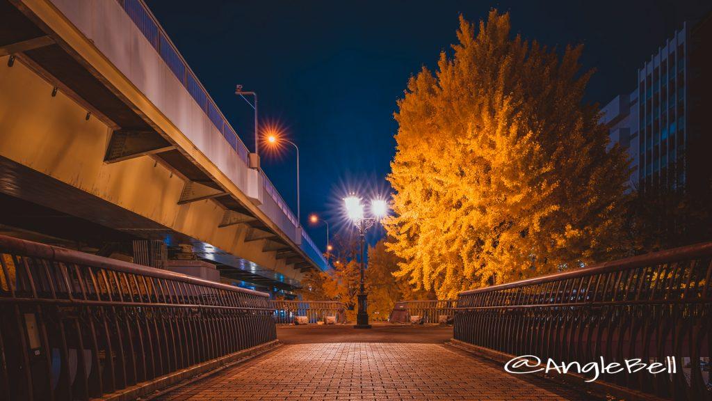 夜景 若宮ブリッジの街灯とイチョウ 2019冬