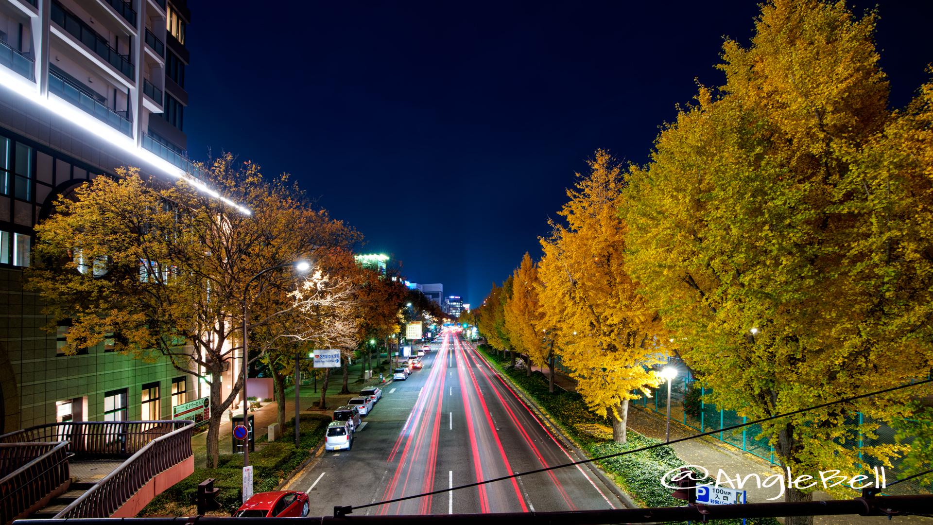 夜景 若宮ブリッジから見る若宮大通 街路樹