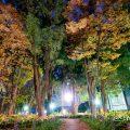 夜景 白川公園 石のまちかど 公園樹木 2019