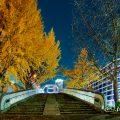 夜景 矢場ブリッジ (若宮大通公園 水の広場)2019年冬