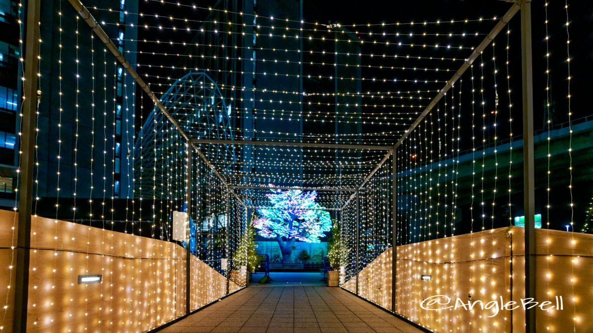 SASASHIMA XMAS LIGHTS 2019