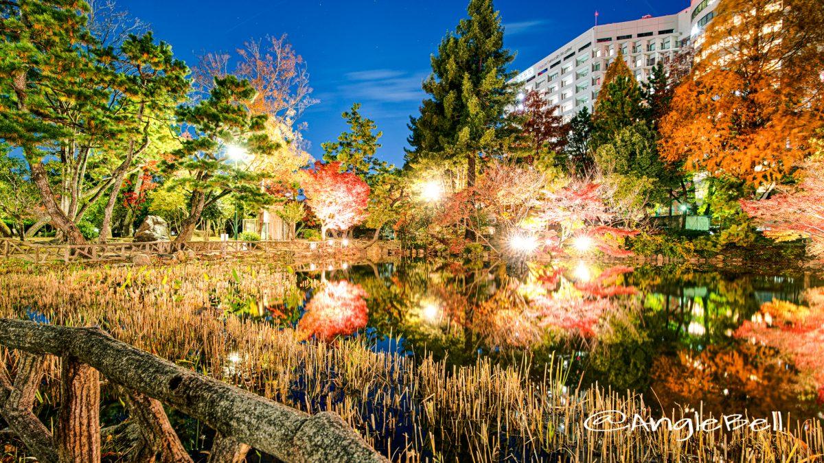 秋の池 ライトアップ 鶴舞公園 2019年冬