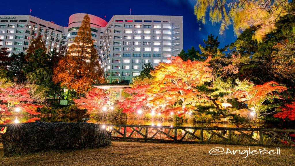 秋の池 紅葉ライトアップ 2019年 鶴舞公園
