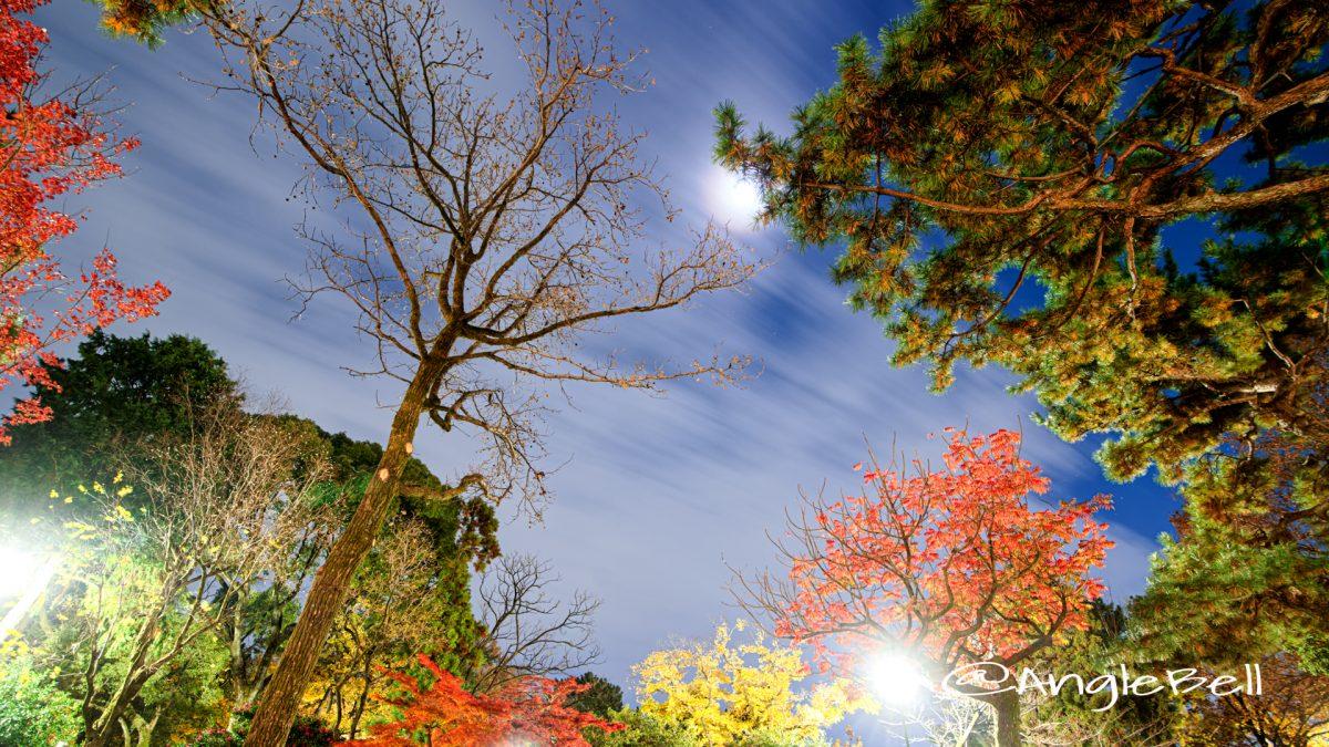 月夜 鶴舞公園 秋の池 公園の樹木と夜空 2019
