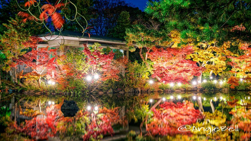 鶴舞公園 秋の池 ライトアップ 2019