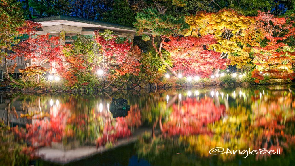 紅葉ライトアップ 鶴舞公園 秋の池 2019年12月