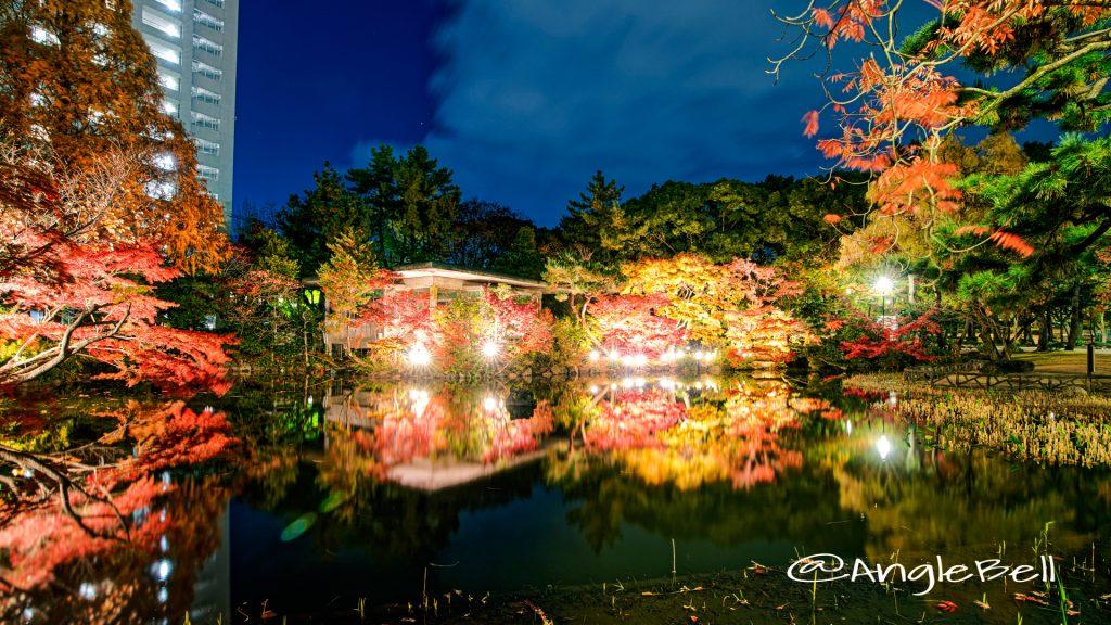 秋の池 鶴舞公園 ライトアップ2019冬