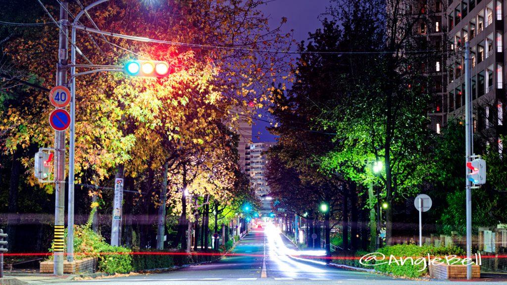 夜景 名工大前から見る紅葉 昭和区鶴舞町 街路樹