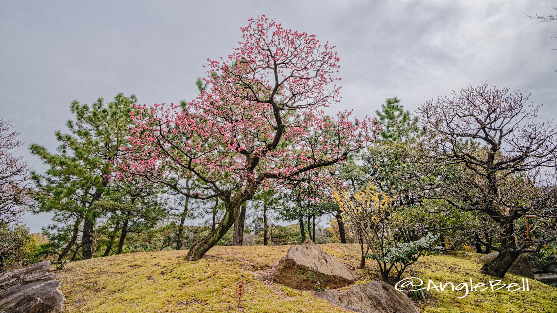 徳川園 淋子梅 March 2020