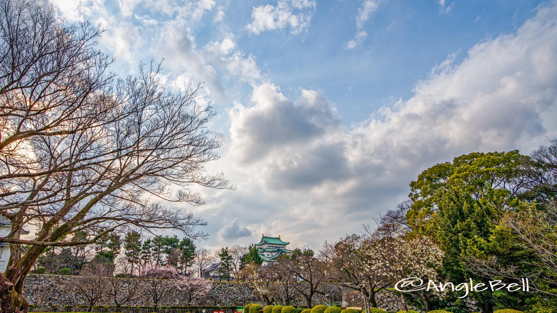 名古屋城 二之丸広場 春 2020