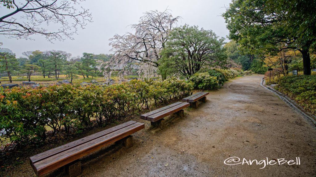 白鳥庭園 水琴窟前のベンチ March 2020