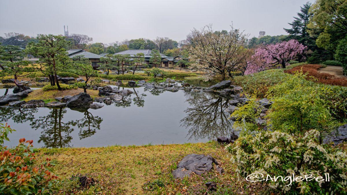 雨の日の水郷の景 白鳥庭園 March 2020