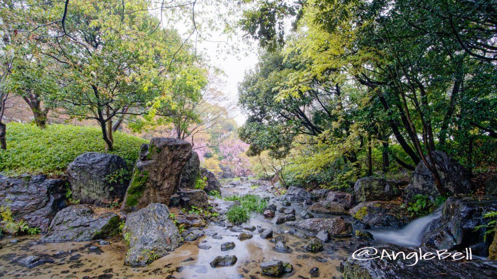 雨天 白鳥庭園 滝の景 (木曽橋 渓谷) March 2020