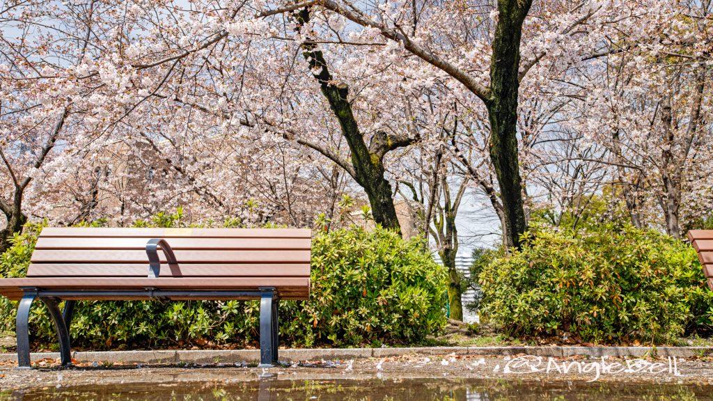 鶴舞公園 なごやかベンチと桜林 March 2020