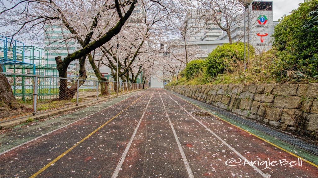 第2号栄公園 園路東側の桜 March 2020