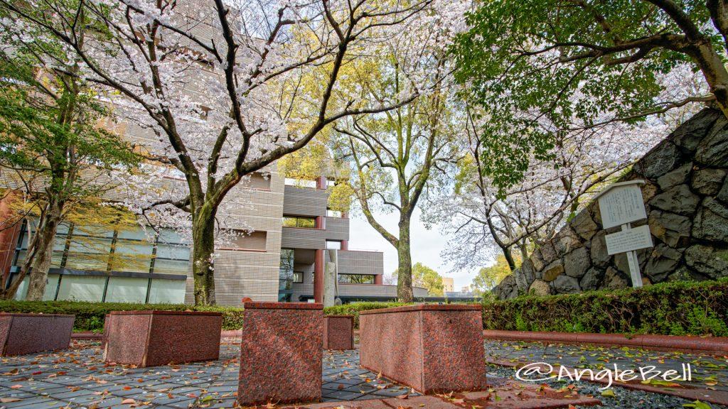 愛知県図書館 名勝標札前の桜 March 2020