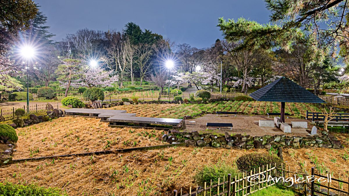 夜景 鶴舞公園 菖蒲池 April 2020