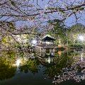 夜景 鶴舞公園 竜ヶ池 浮見堂と桜の風景 April 2020