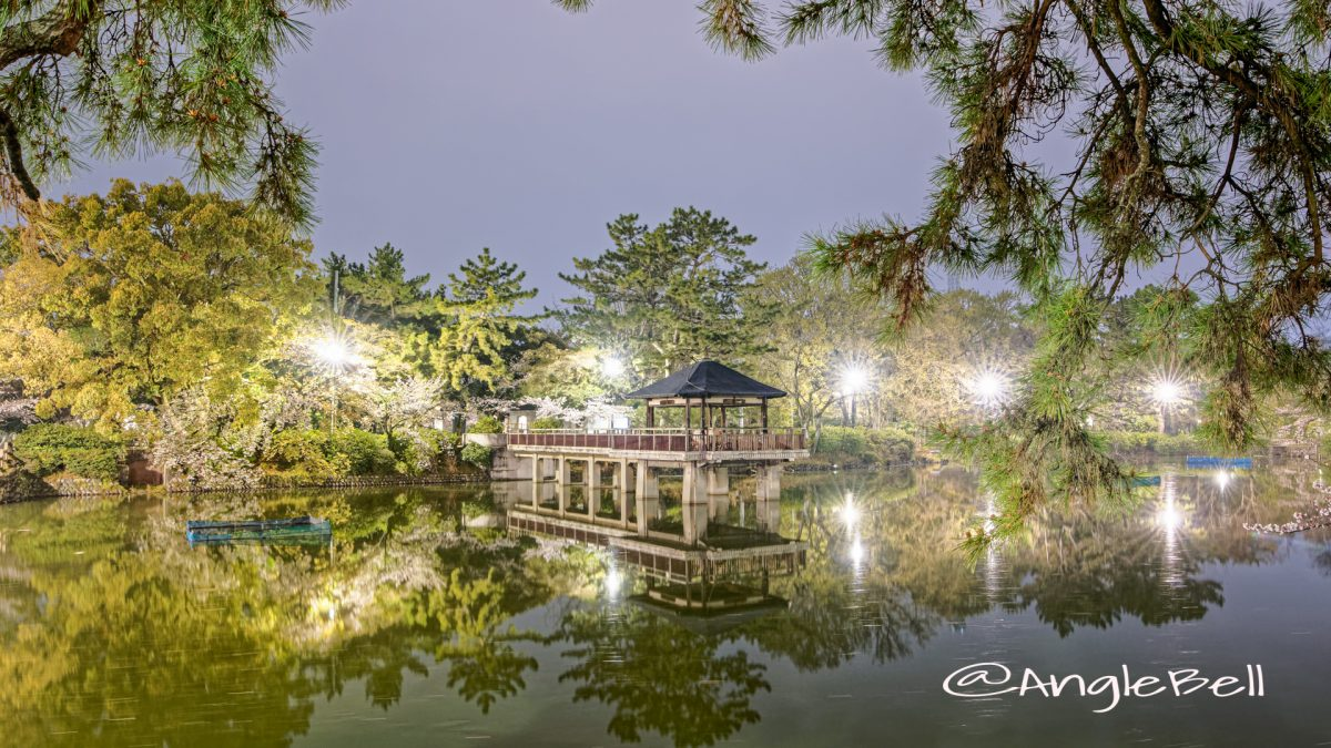 夜景 鶴舞公園 竜ヶ池 浮見堂 2020春