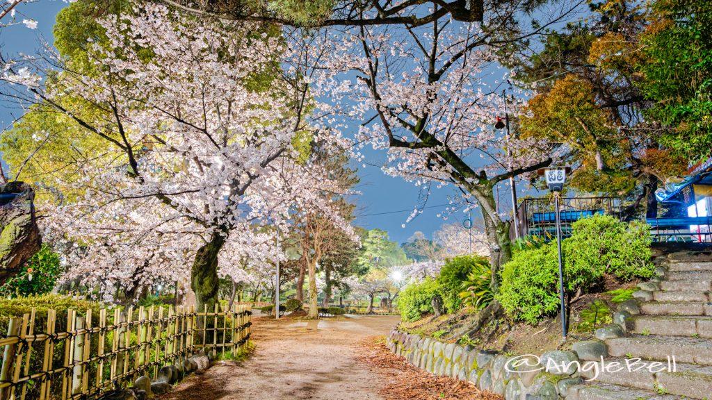 夜景 鶴舞公園 菖蒲池 グリーンアドベンチャー35番の桜 April 2020