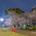 夜景 鶴舞公園 なごやかベンチと桜 April 2020