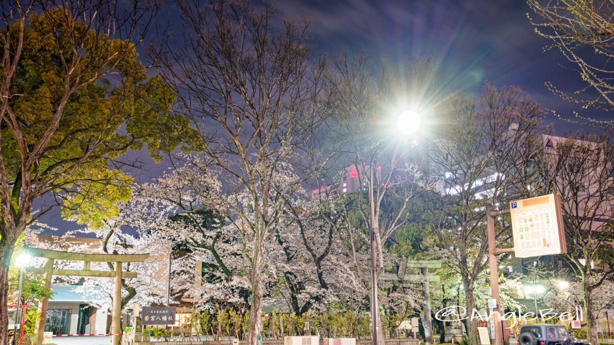 夜景 若宮大通公園から見る若宮八幡社 April 2020