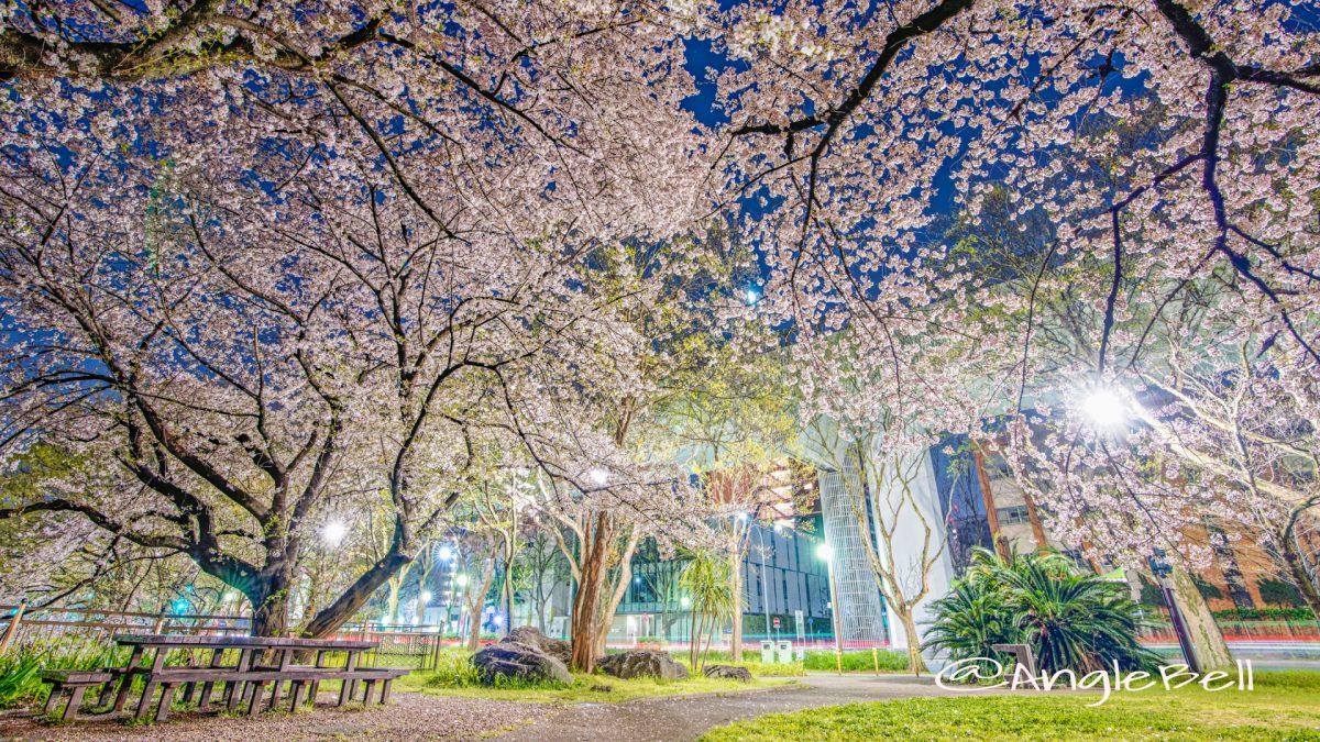 夜景 ライオンヘルスパーク (名城公園)の桜風景 2020春