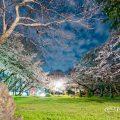 夜景 大津橋小園テニスコート側から見る桜 April 2020