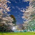 夜景 大津橋小園テニスコート側の桜 April 2020