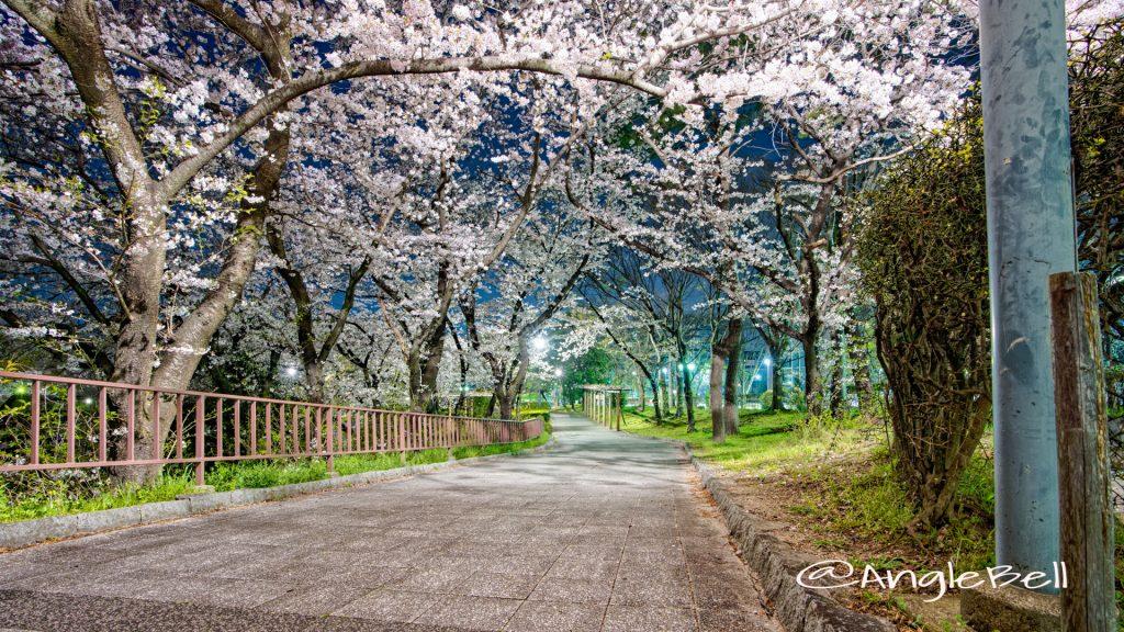 夜景 名城公園 二の丸東駐車場 April 2020
