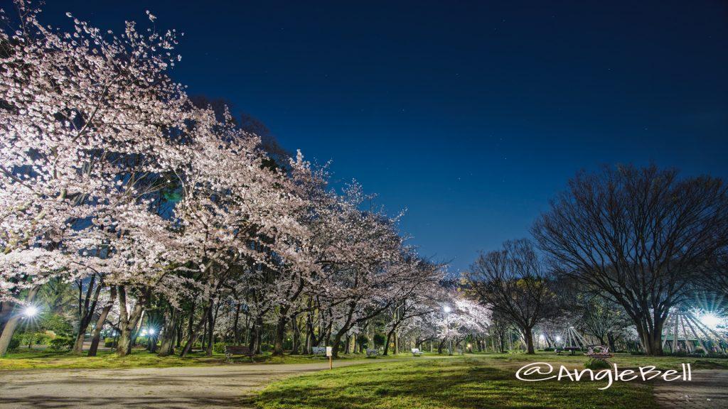 名城公園 芝生広場のベンチと桜 April 2020