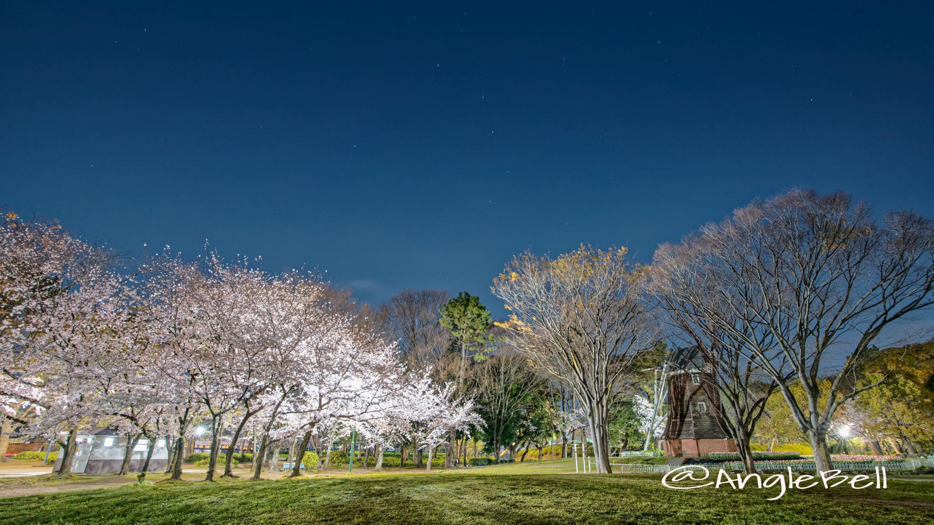 夜景 名城公園北園 芝生広場 April 2020