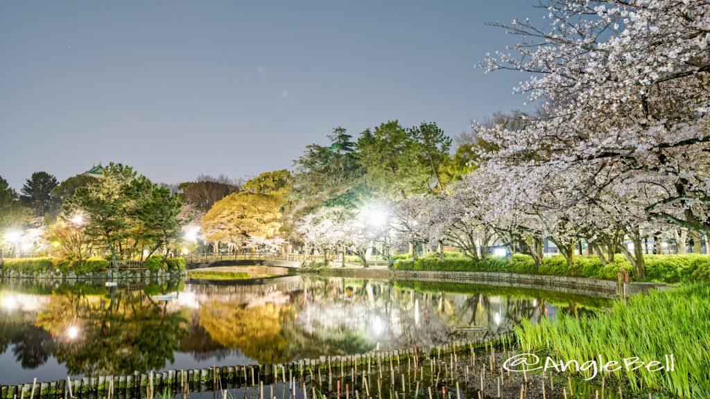 夜景 名城公園北園 おふけ池のソメイヨシノ(領内桜)2020春