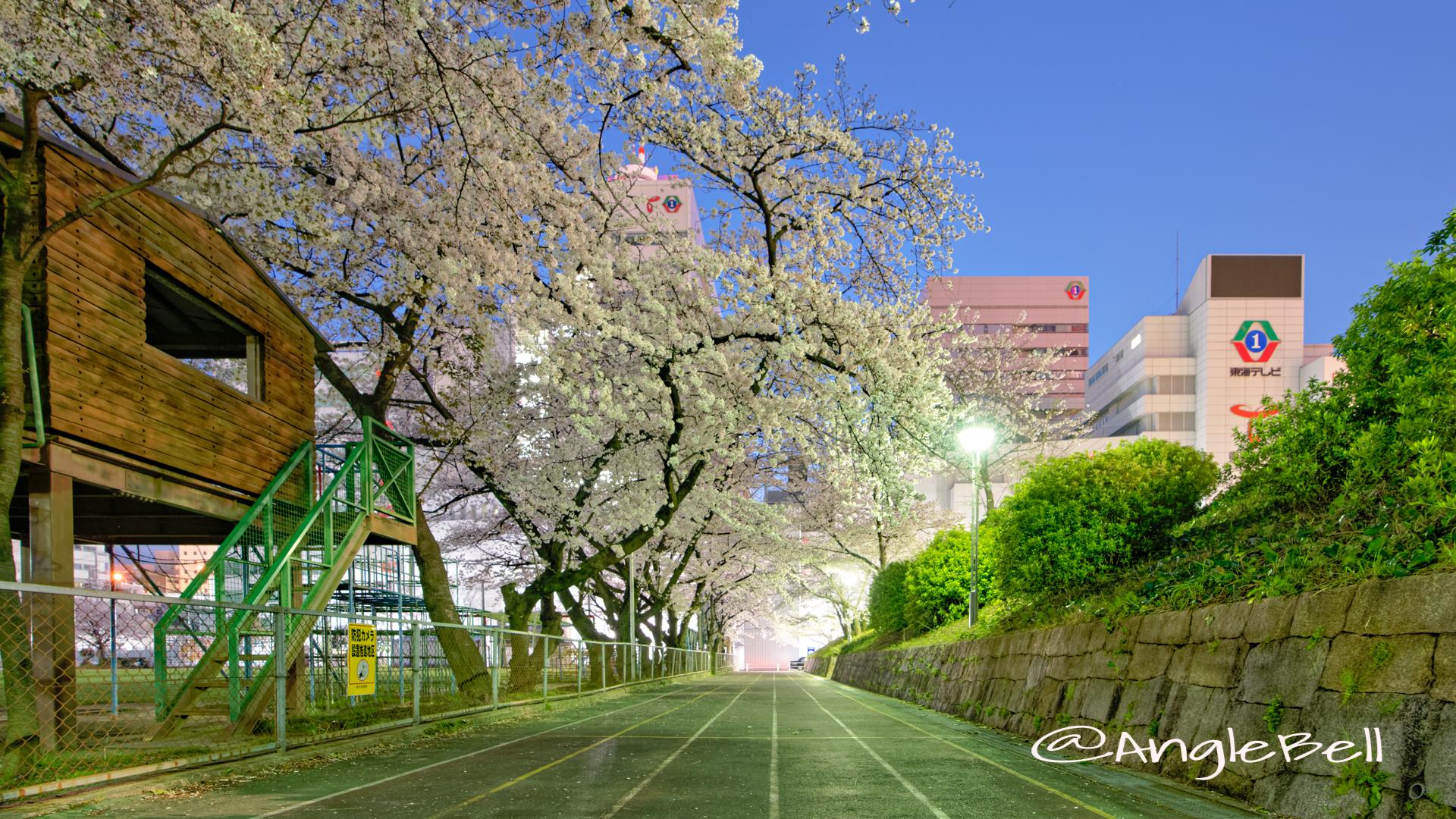 第2号栄公園 (夜景) 園路東側の桜 April 2020