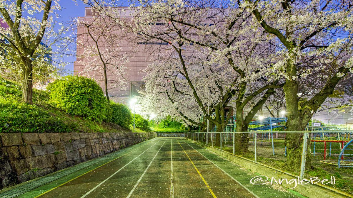 夜景 第2号栄公園 園路西側の桜 April 2020