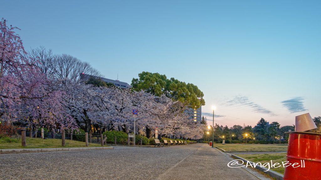 朝焼けの桜林となごやかベンチ 鶴舞公園 2020春