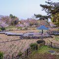 早朝 鶴舞公園 菖蒲池 全景 2020年春