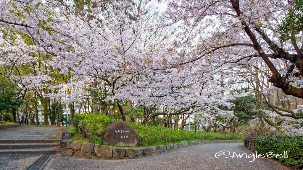 鶴舞公園 (早朝) あじさいの散歩道 公園東の桜 April 2020