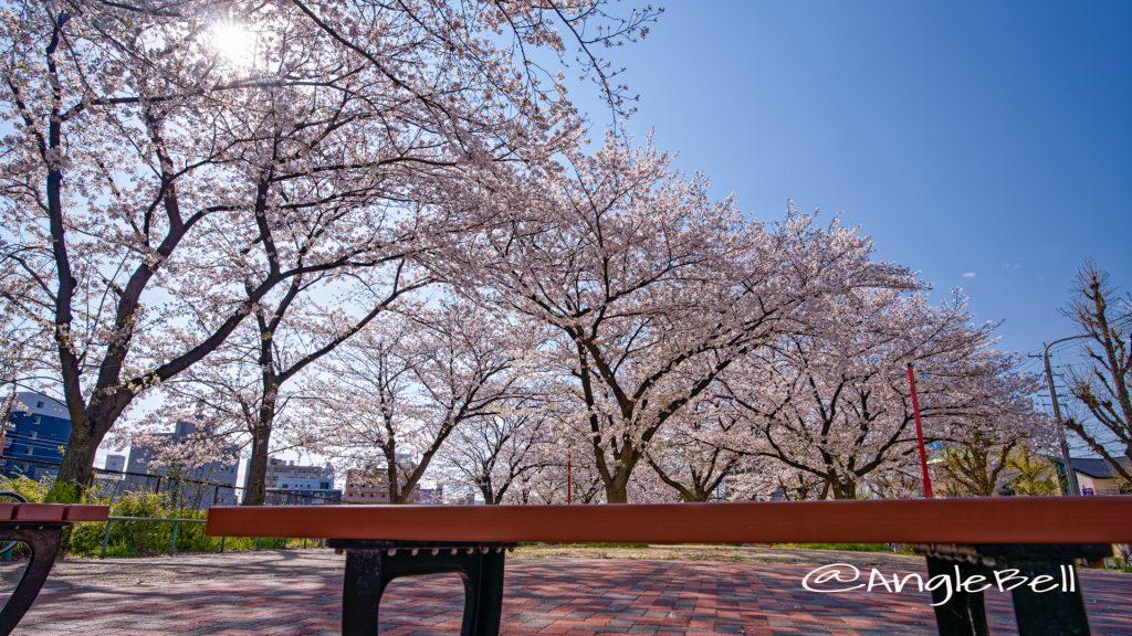 金山公園の桜 April 2020