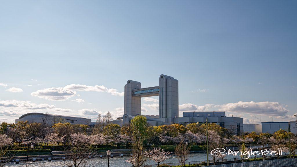 白鳥プロムナードの桜並木と名古屋国際会議場2020年春