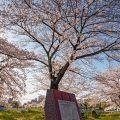 堀川端公園 April 2020