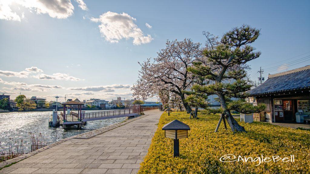 宮の渡し公園 船着場と桜 April 2020