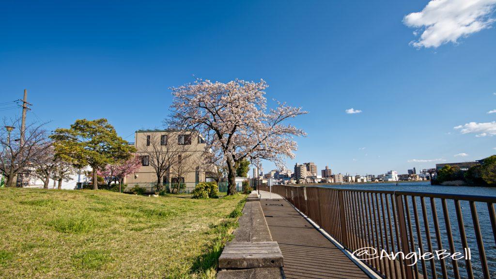 大瀬子浜公園 熱田区大瀬子町 April 2020
