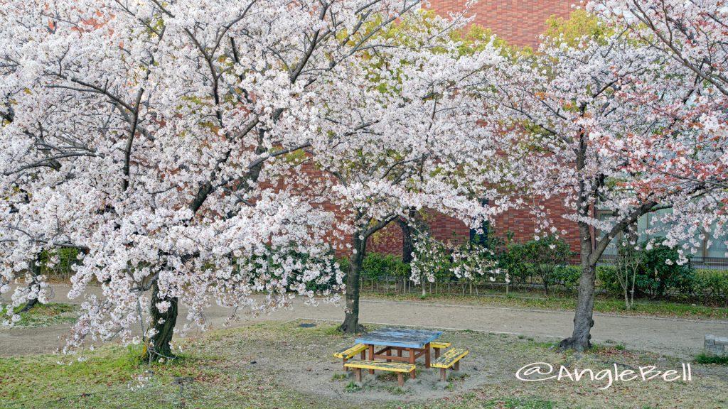 白鳥公園 ベンチと桜 April 2020