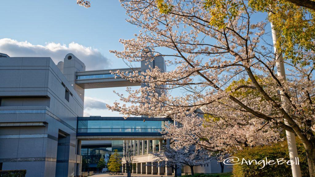 名古屋国際会議場と桜 2020年春