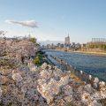 白鳥公園 桜並木と名古屋国際会議場 2020