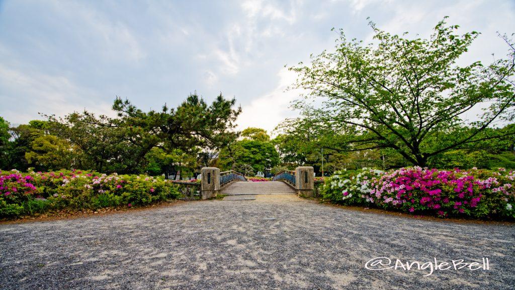 名城公園 御深井橋とツツジ(躑躅) May 2020