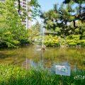 鶴舞公園 秋の池 噴水 May 2020