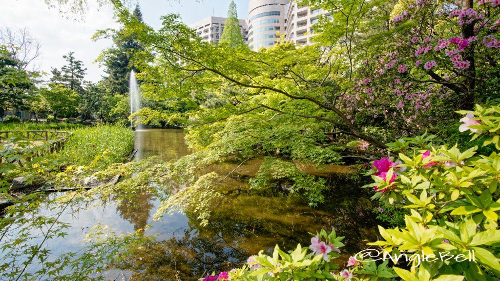 秋の池 鶴舞公園 春 2020