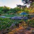 鶴舞公園 菖蒲池 全景 May 2020
